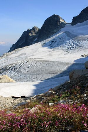 Alpine Flowers And Glacier (Coast Mountains, British Columbia, Canada) Stock Photo