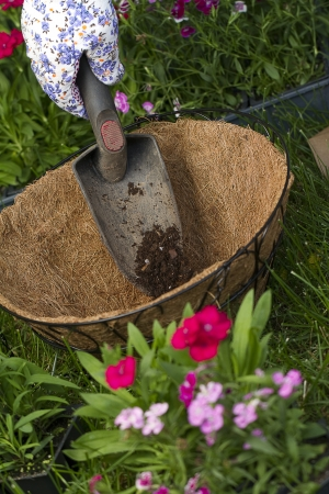 hanging basket: a gardener dumps some potting soil into a coco lined wire hanging basket