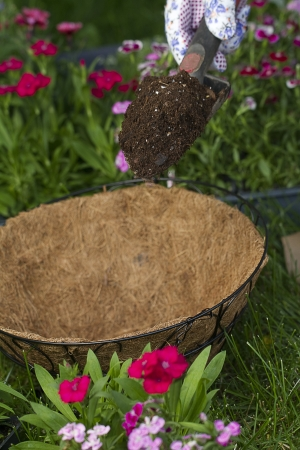 hanging basket: a gardener is about to dump some potting soil into an empty coco lined hanging basket Stock Photo