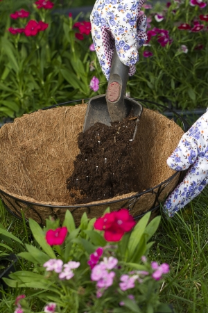 hanging basket: a gardener is filling up a coco lined hanging basket with potting soil  Stock Photo