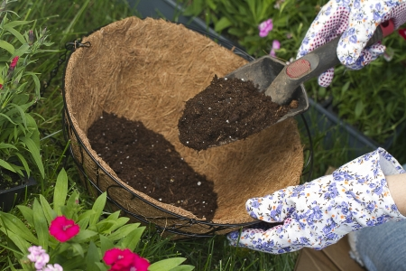 flower baskets: a gardener is adding more potting soil into coco lined hanging basket  preparing for flowers