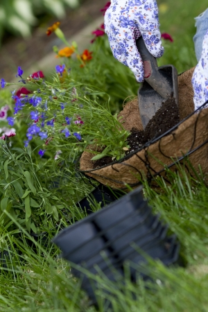 hanging basket: gardener pours soil into hanging basket, blurred motion on soil to show action of pouring  empty containers in foreground out of focus