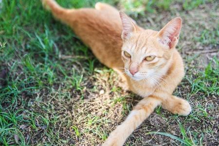 resent: An unfriendly cat Stock Photo