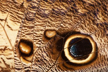 veiny: marr�n ala de la mariposa tropical