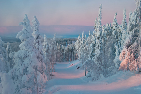 laponie: arbres au coucher du soleil en hiver, la Finlande, la Laponie Banque d'images