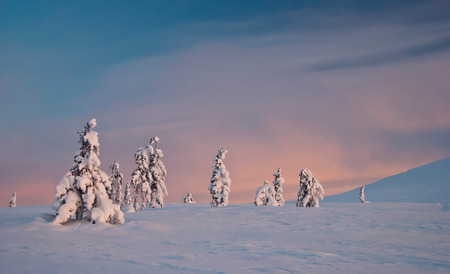 winter tundra at sunrise. Finland, Lapland photo
