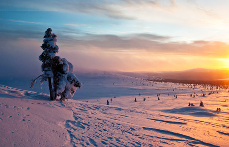 tree at sunset in winter. Finland, Lapland photo