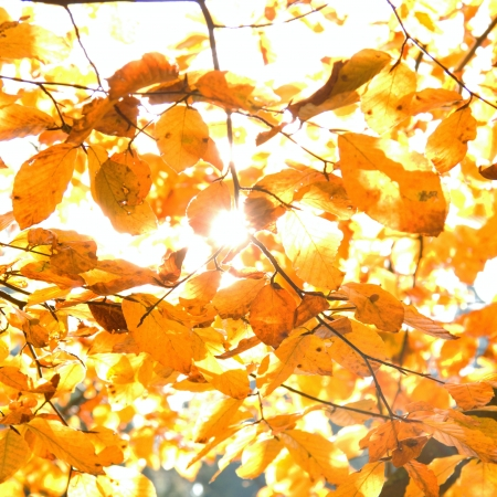 Yellow leaves illuminated by straight sunshine, autumn background, instagram design photo