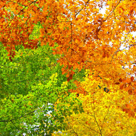 Yellow, green and orange leaves, autumn background Stock Photo