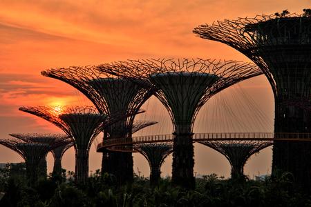Singapore gardens at sunrise photo