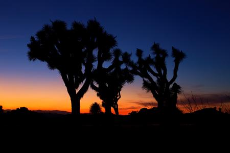 joshua tree: Sunset over Joshua Tree, Joshua Tree National Park, USA