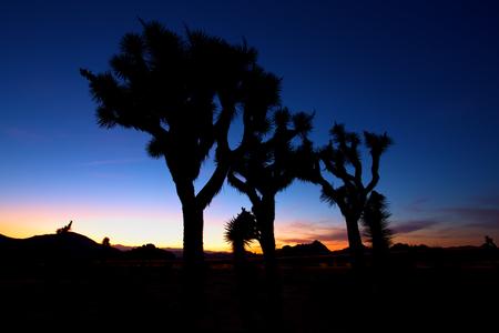 joshua tree national park: Sunset over Joshua Tree, Joshua Tree National Park, USA