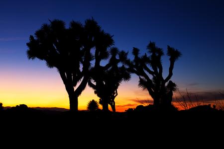 joshua: Sunset over Joshua Tree, Joshua Tree National Park, USA