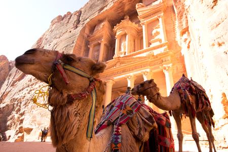 Camel in front of The Treasury (Al Khazneh) in Petra Ancient City, Jordan Stock Photo