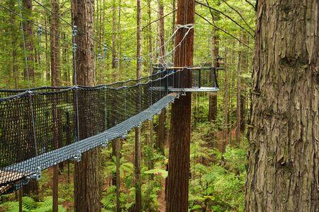 Treewalk through Forest of Tree Ferns and Giant Redwoods in Whakarewarewa Forest near Rotorua, New Zealand Imagens