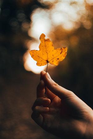 view on an orange leaf in autumn