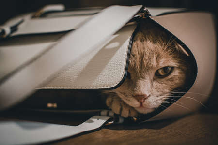 a cute cat sleeping in a bag