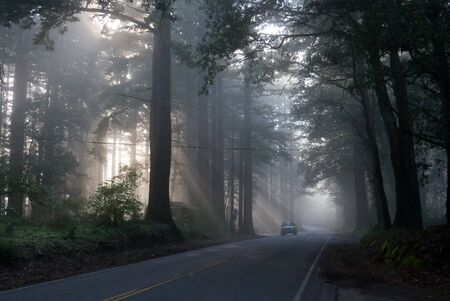 Fog in San Francisco forest Stock Photo - 10413741