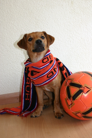 disguises: Dog with orange scarf and football.
