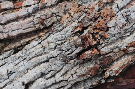 Bark Nature Abstract photo