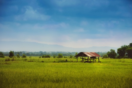 Farmer hut on green field at Prajantakam district ,Prachin Buri province ,THAILAND  photo