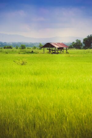 Farmer hut on green field photo