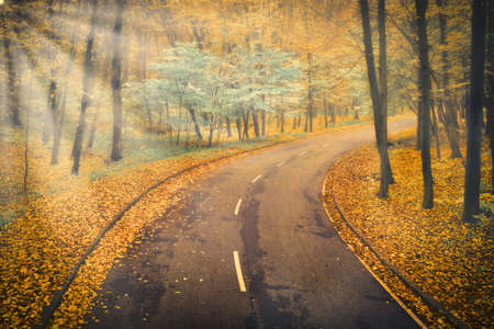 Asphalt Road in the foggy autumn forest - the highway goes into the distance for a turn and dissolves in the fog with sun rays.