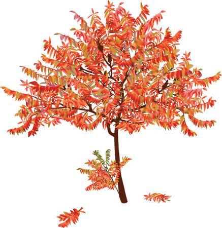 intricate: Autumn acacia