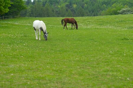 Two horses on a rural pasture