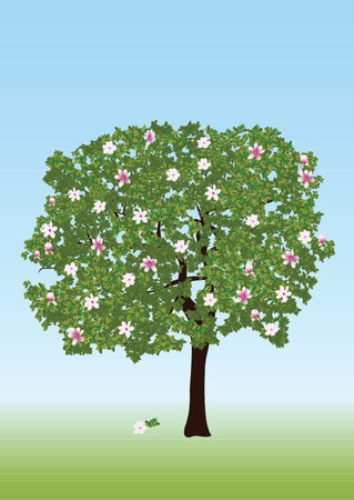 Blossom magnolia. Buds, flowers and lot of leafs. Illustration
