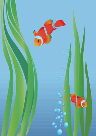 Two anemonefish between seaweed. Vector.