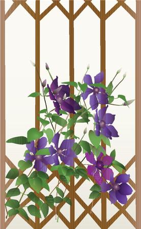 clematis flower: Flowers of clematis. Vector, gradient. Illustration
