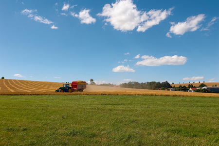 Harvesting. A tractor collecting wheat on a field. Stock Photo - 1425087