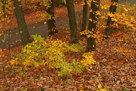 Photo of an autumn forest with the fallen and yellow foliage photo