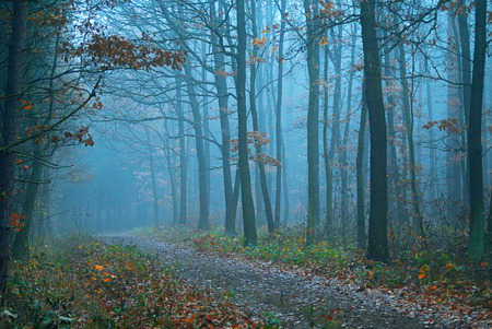 Mystical condition of a forest in the early morning Stock Photo - 1498709