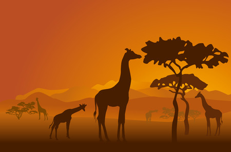 Silhouettes of giraffes in national park of Kenya