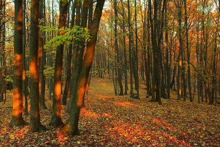 The forest path with fallen autumn leaves photo