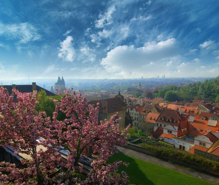 Photo of Prague. View on a quarter of old city. Spring morning. Blooming apple on sity garden photo