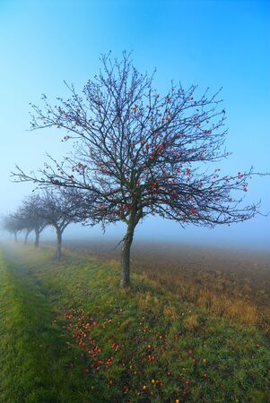 Line of the trees growing at road. Autumn Stock Photo - 2241077