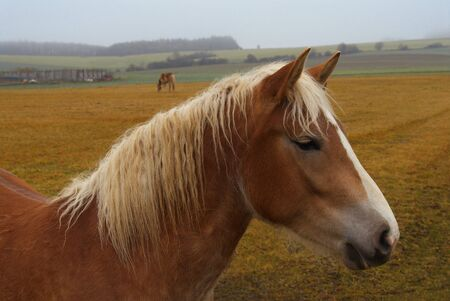 The horse grazed on a rural meadow. photo