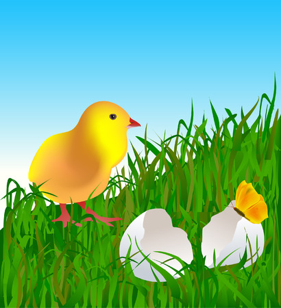 Little easter chick on the grass Stock Vector - 2707105