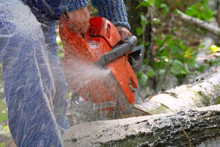 Man cutting big piece of wood with chain saw. photo