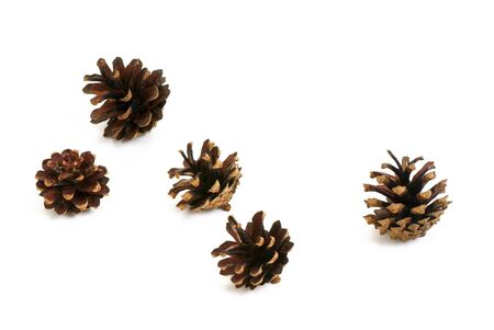 Five pine cone isolated on white background.  photo