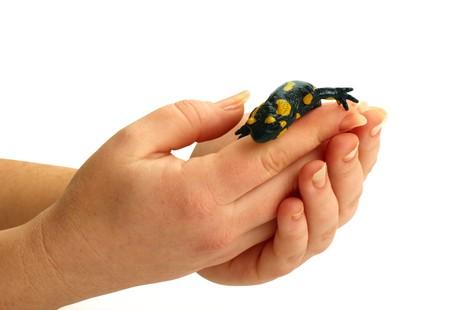 Fire Salamander on in women hands Stock Photo - 4222439