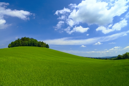 Green fields and woods on the hill  Stock Photo