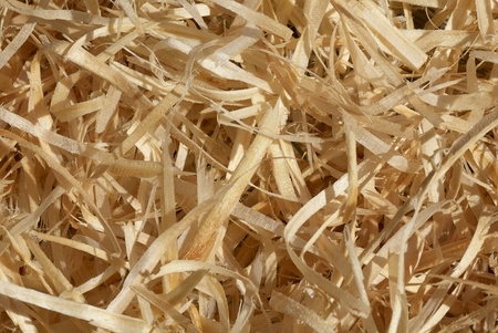 wood shavings: Close-up of wood shavings for use as a background
