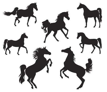Silhouettes of Arabian Horse Illustration