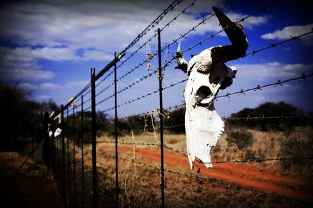 A bulls skull hangin from a fence in a desserted farm photo