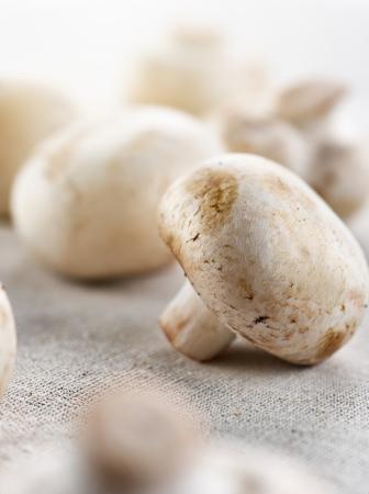 uncooked mushrooms closeup Stock Photo - 20298787