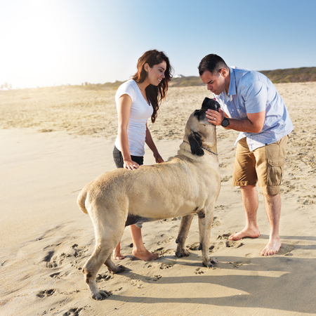 couple playing with pet dog  photo